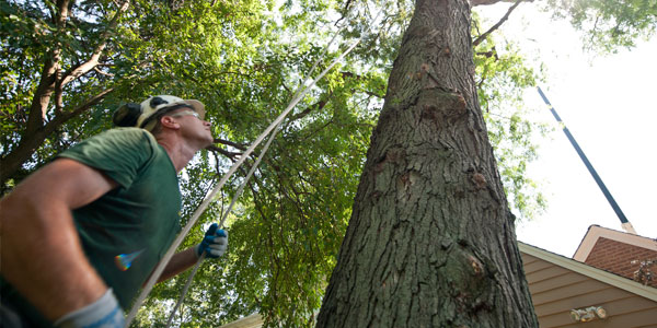 Technology helping re-locating Trees